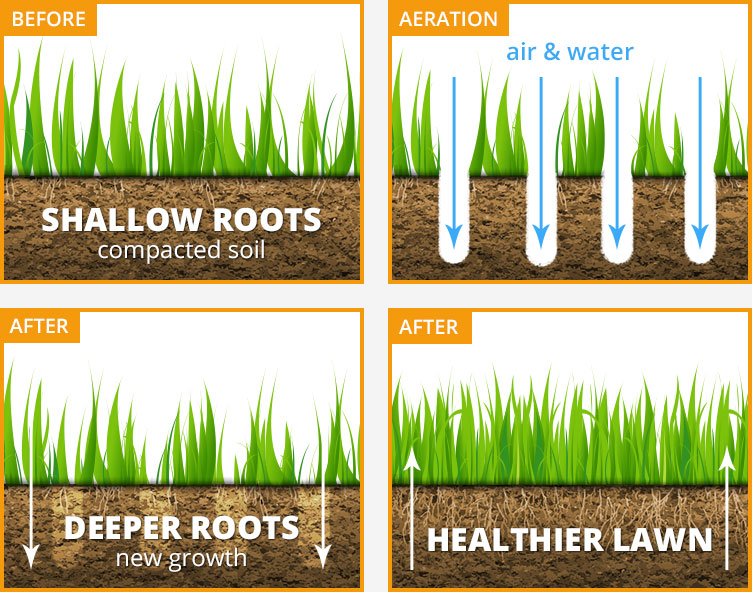 graphic that shows lawn aeration process